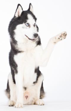 Hundeschule Pro Canis Willkommen
