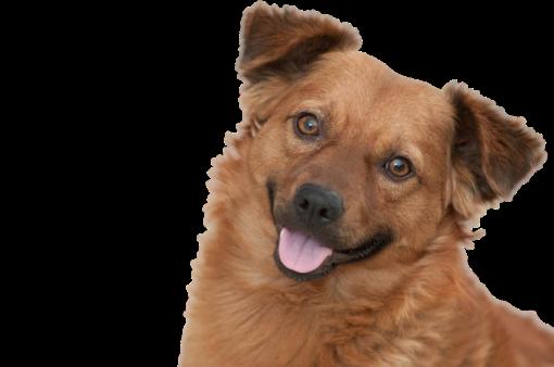 Hundeschule Pro Canis Kontakt