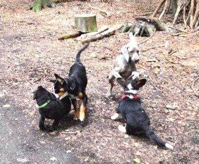 Hundeschule Pro Canis Welpenschule