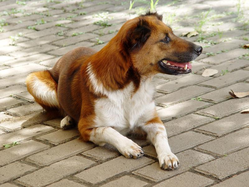 AmStaff Gelbe Schleife Hundeschule Pro Canis